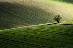 在春天,捷克共和国期间,详述风景在南Moravian领域 库存图片