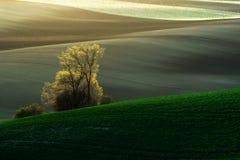 在春天,捷克共和国期间,详述风景在南Moravian领域 免版税图库摄影