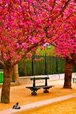 巴黎在春天 库存图片
