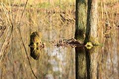 死水在春天 免版税库存图片