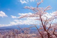 在春季和Mt的樱花佐仓 在蓝色的富士 免版税图库摄影