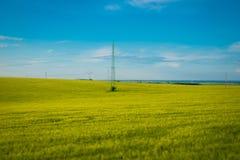 在春季的绿色和黄色麦田在天空蔚蓝,宽照片下 r 免版税库存图片