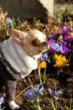 在春日的颜色的快乐的狗 库存图片