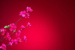 在春节期间有红色背景,樱花 免版税库存照片