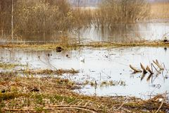 在春雨以后的大水坑 库存图片