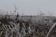 在春黄菊的树冰 库存图片
