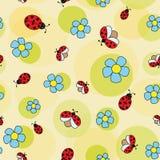 在春黄菊的瓢虫 免版税库存照片