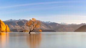 在是著名地标在南岛的湖Wanaka, Ne的树 免版税库存图片