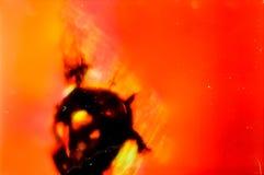 在显微镜的历史的玻璃检查有在35mm苏维埃Orwochrom影片的照片的以manny瑕疵 库存图片