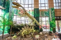 在显示的中国恐龙骨骼 免版税图库摄影