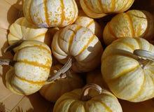 在显示的白色笋瓜在市场上 库存图片