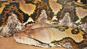 在显示的Python在一个庭院在南达科他 库存照片