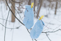 在晒衣夹的蓝色手套 库存照片