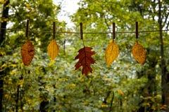 在晒衣绳的秋叶 免版税库存图片