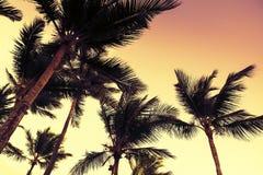 在晚上天空的棕榈树剪影 库存图片
