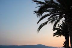 在晚上天空的棕榈树 免版税图库摄影