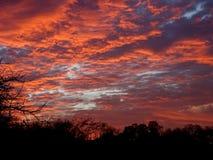在晚上天空的红色云彩在冬天 免版税库存照片