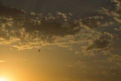 在晚上天空的鸟 免版税库存图片