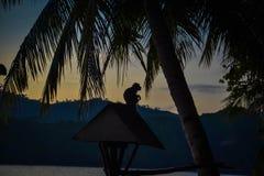 在晚上天空的猴子剪影 免版税库存照片