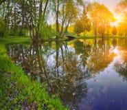 在晚上太阳的树在一个池塘附近在城市停放 库存照片