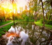 在晚上太阳的树在一个池塘附近在城市停放 免版税库存照片