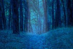 在晚上明亮地被照亮的道路在一个神奇森林里 库存照片