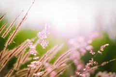 在晚上期间,有花的特写镜头草甸 免版税图库摄影
