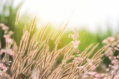 在晚上期间,有花的特写镜头草甸 库存图片