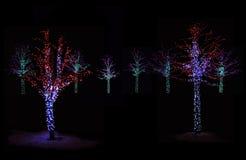 在晚上被照亮的树 免版税图库摄影