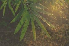 在晚上降露桄榔阳光领域 图库摄影