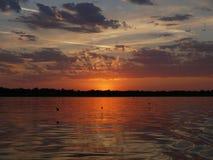 在晚上水上的少量鸥 免版税库存图片