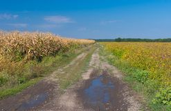 在晚夏季节的农业风景 库存照片