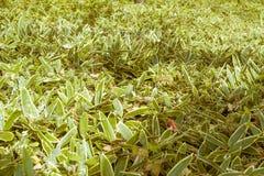在晚秋天期间的审美草在日本庭院里在东京,日本 免版税库存图片