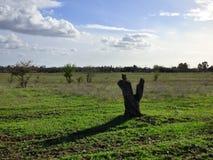 在晚年的树 免版税库存图片