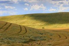 在普利亚和巴斯利卡塔之间 与玉米田的多小山风景 意大利 库存图片
