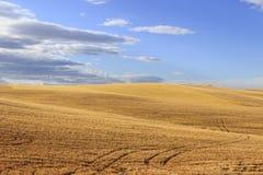 在普利亚和巴斯利卡塔之间 与玉米田的多小山风景 意大利 库存照片