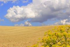 在普利亚和巴斯利卡塔之间 与玉米田的多小山风景 意大利 免版税库存图片