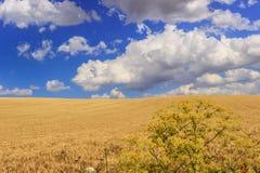 在普利亚和巴斯利卡塔之间 与玉米田的多小山风景 意大利 免版税图库摄影
