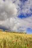 在普利亚和巴斯利卡塔之间:与绿色玉米田的多小山风景 意大利 库存图片