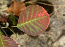 在普利特维采湖群国家公园的美丽的秋叶 免版税库存图片