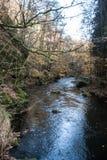 在普劳恩市附近的Trieb河在Vogtland 免版税库存照片