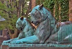 在普林斯顿大学的老虎雕象 库存照片