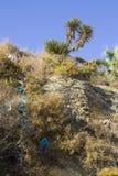 在普腊亚da Oura海滩的典型的被暴露的沉淀沙子石头峭壁面孔在有杉树的Albuferia在上面 免版税库存照片