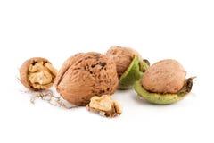 在普通的坚果仁,壳和绿色皮肤中的硕大核桃,在白色背景 免版税图库摄影