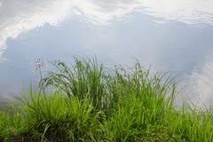在普里皮亚季河的银行 夏天- 7月 天空的反射在水镜子的  免版税库存照片