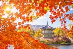 在景福宫宫殿的秋天地标有槭树的离开,汉城 免版税库存照片
