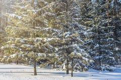 在晴天的冬天森林 26个综合数字式巨大的mpix全景射击范围多雪的结构树 背景圣诞节关闭红色时间 Xmas自然背景 库存图片