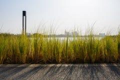 在晴朗的冬天下午的湖边象草的道路 库存图片