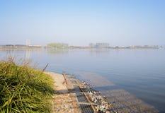 在晴朗的冬天下午,天府新的地区的湖边草 库存图片