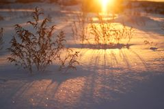 在晴朗的森林冬天雪的日落 在圣诞节前的早晨 童话森林在阳光下 库存图片
